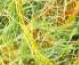 217 Verde Claro - Amarillo - Naranja